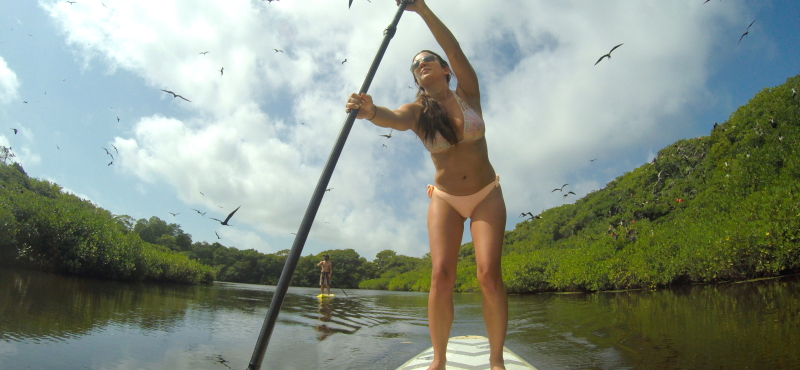 Paddleboarding through a Bird Sanctuary